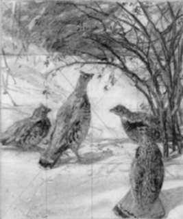 Drawing by Aiden Lassell Ripley: Four Grouse in a Thicket, represented by Childs Gallery