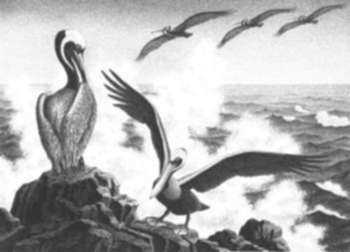 Print by Alan Crane: Winged Fisherman, Mazatlan [Mexico], represented by Childs Gallery