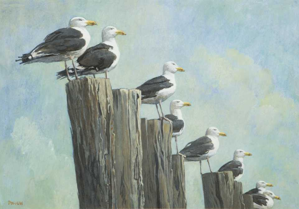 Avian Art – Online Exclusive Exhibition