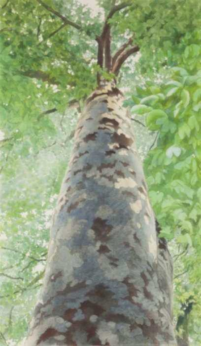 Painting by Ben Norris: Tree II, represented by Childs Gallery