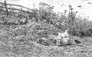 Print by Charles François Daubigny: La Poule et ses Poussins, represented by Childs Gallery