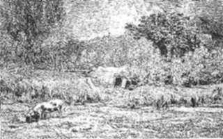 Print by Charles François Daubigny: Un Cochon dans un Verger, represented by Childs Gallery