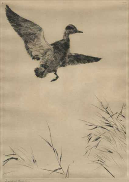 Print by Frank Benson: Springing Teal, represented by Childs Gallery