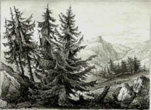 Print by H.W. Burgess: Spruce Fir, represented by Childs Gallery
