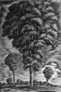 Print by Isac Friedlander: [Trees], represented by Childs Gallery