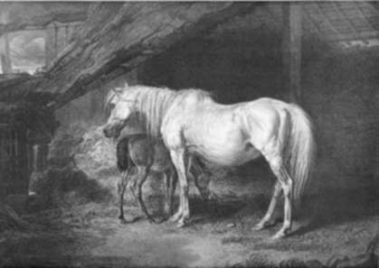 Print by James Ward: Primrose and Foal: A Brood-Mare, late the Property of his Gr, represented by Childs Gallery