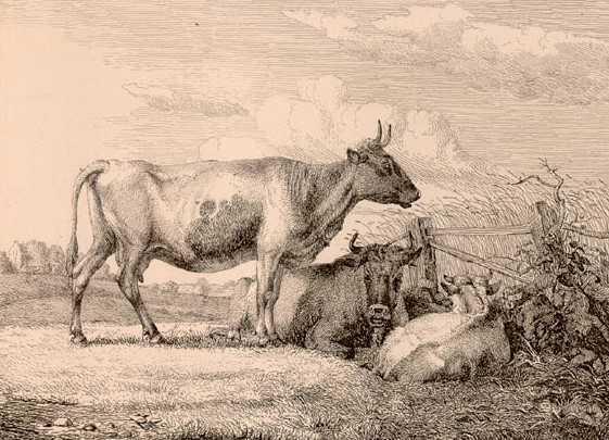 Johann Wilhelm Zillen