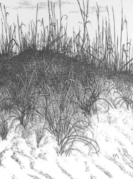 Print by Leo Meissner: Dune Grasses (unsigned), represented by Childs Gallery