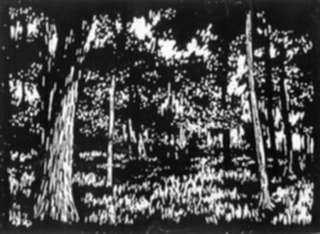 Print by Leo Meissner: Forest Depths, represented by Childs Gallery