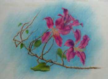 Drawing by Leo Meissner: Hong Kong Orchids, Anna Maria [Florida], represented by Childs Gallery