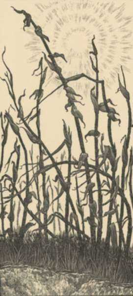 Print by Leo Meissner: Last Year's Corn [Asheville, North Carolina], represented by Childs Gallery