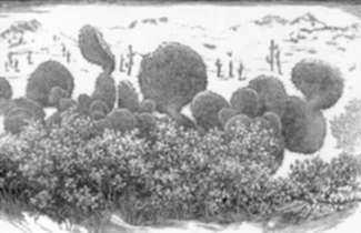 Print by Leo Meissner: Prickly Pear, Arizona, represented by Childs Gallery