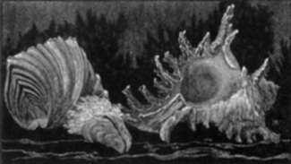 Print by Leo Meissner: Sea Shells (unsigned), represented by Childs Gallery