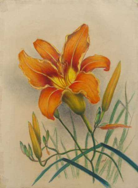 Drawing by Leo Meissner: Tiger Lily, represented by Childs Gallery