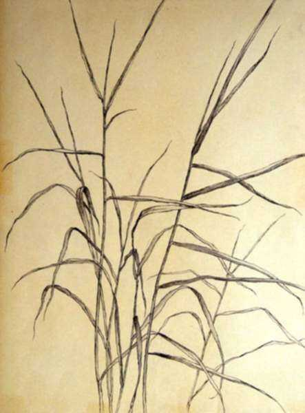 Drawing by Leo Meissner: Wild Grasses, represented by Childs Gallery