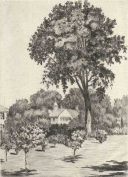 Print by Paul Lameyer: Elm Tree, represented by Childs Gallery