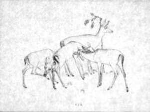 Drawing by Robert Austin: Deer, represented by Childs Gallery
