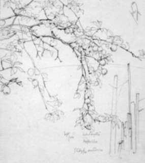 Drawing by Robert Austin: Study for Autumn, represented by Childs Gallery