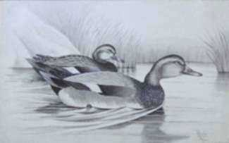 Drawing by Walter Rich: Two Ducks, represented by Childs Gallery
